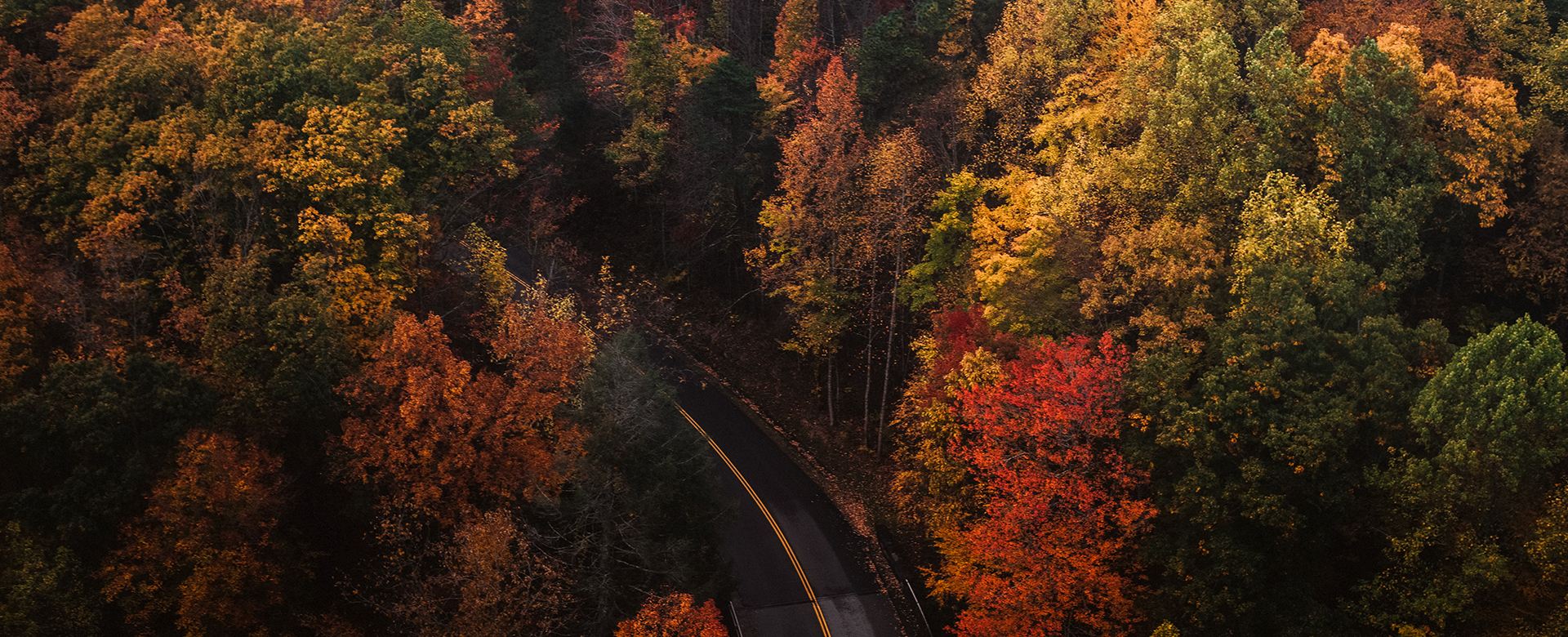aerial view of colorful trees in the fall