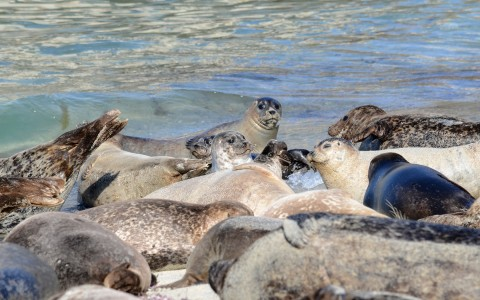 seals sunbathing in beach