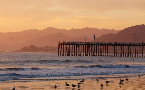 View of Pismo Pier and birds