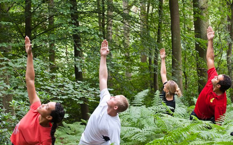 people doing yoga in the forest wellness health body and mind