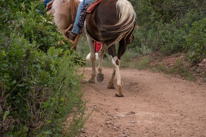 best horseback riding in colorado springs