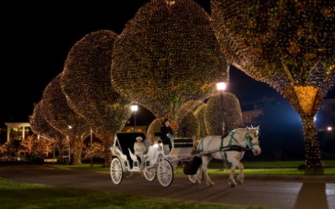 White carriage ride pulled by horse