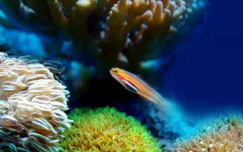 Small orange fish in tropical reef