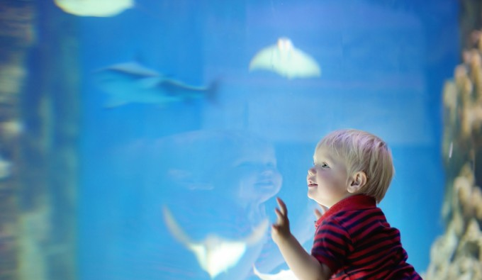 Toddler boy watches fishes