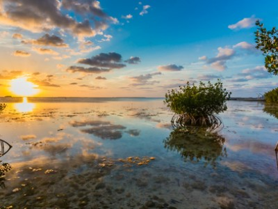 Amara Cay: Blog | Things To Do in Islamorada | FL Keys Resort