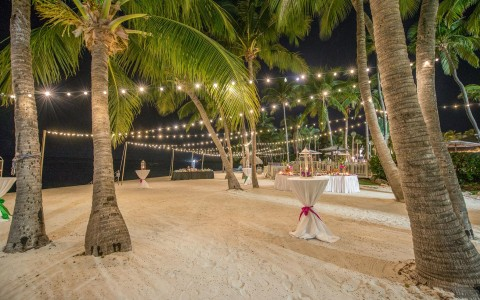 Outdoor wedding venue set up with lights hanging from palm trees