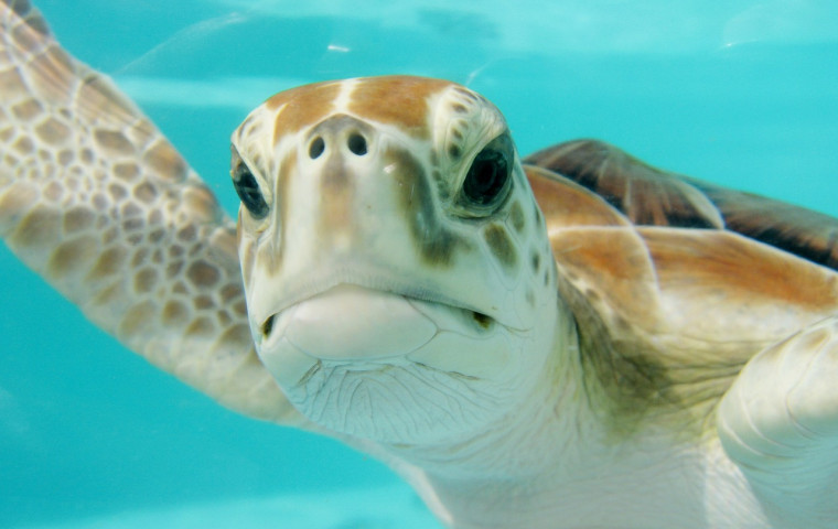 sea turtle face up close
