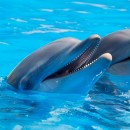 two dolphins in water