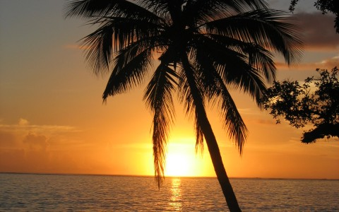 palm tree in front of sunset