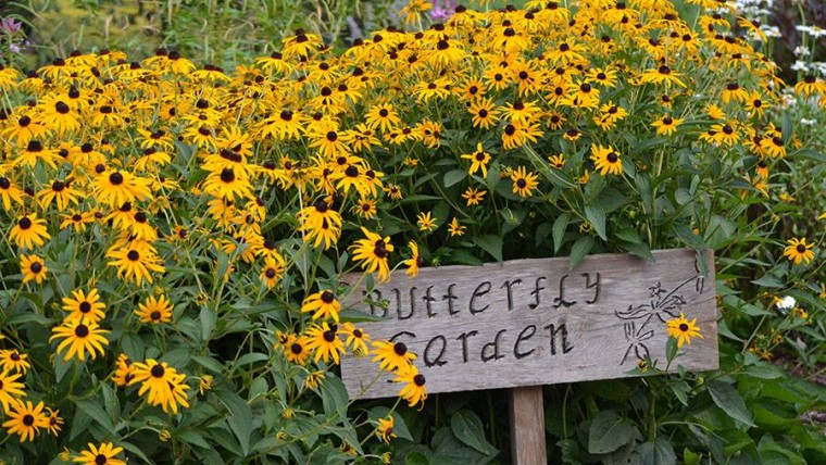 Butterfly Garden with Yellow Daisies