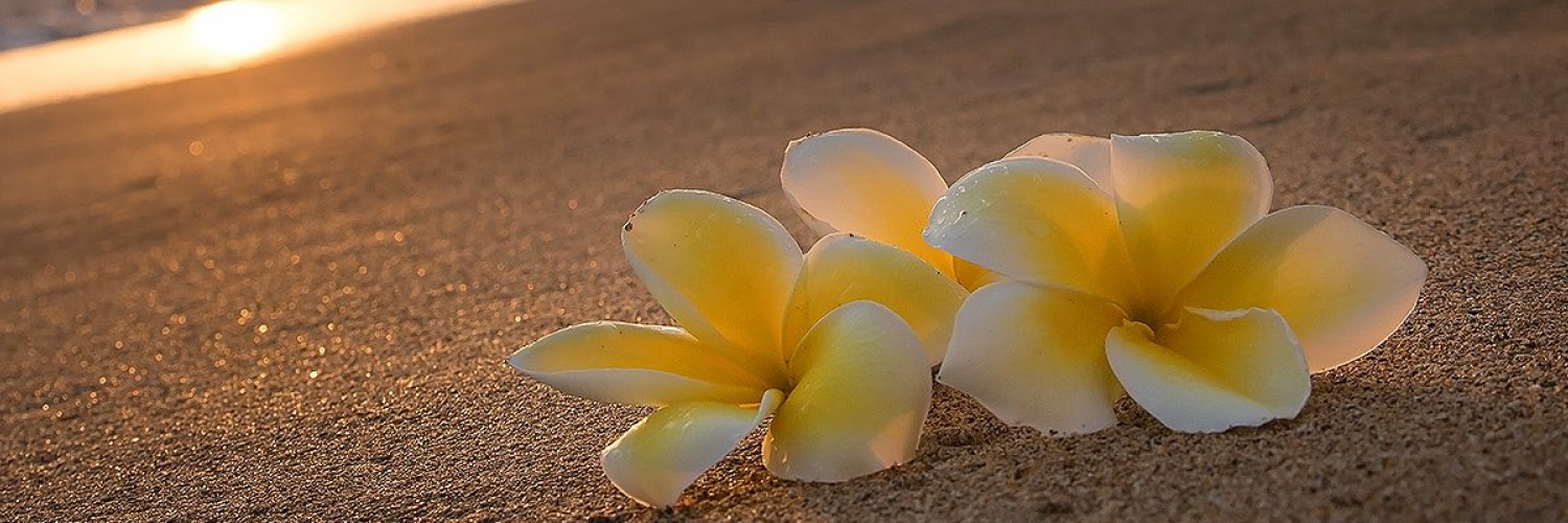 Two flowers sitting on a beach