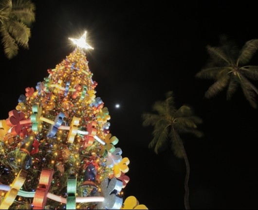 christmas tree in hawaii