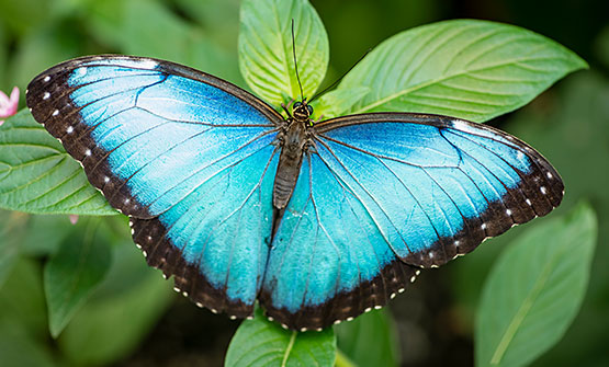 Blue butterfly on plant