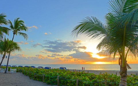 Sunsetting on beach surrounded by beach plants & palm trees