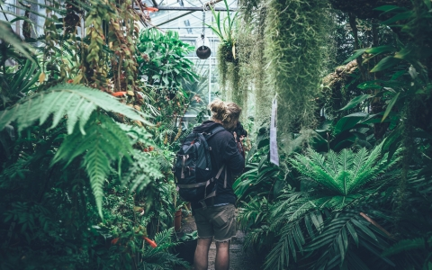 Man wearing backpack and taking pictures inside of a greenhouse