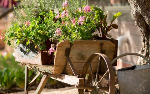 Wooden wheelbarrow with flower arrangement in it