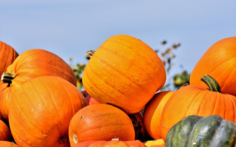 Scare Up Some Fun at the Halloween Harvest Festival