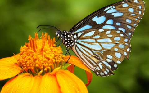 Learn About Okanogan County's Butterflies