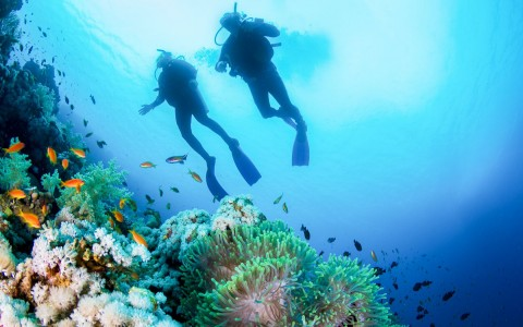 two scuba divers descending down to look at a coral reef with small fish