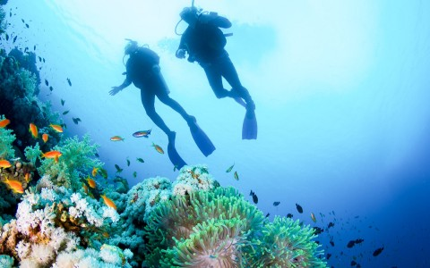 two diver swimming down over a coral reef with small fish