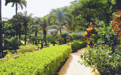 sidewalk at the resort lined with bushes and plants