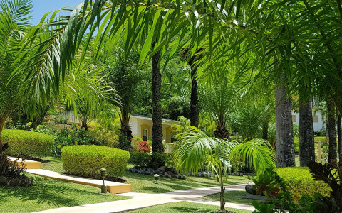 walkway area surrounded by tall draping palm trees, grass, and bushes with a small guest house tucked behind the greenery