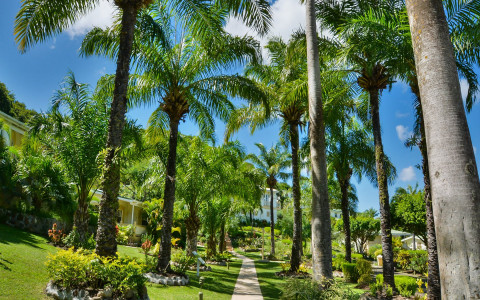 a walkway surrounded by tall green palm trees and green crass