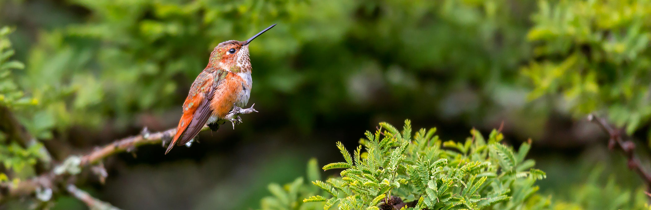 Small orange bird standing on branch