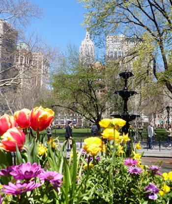 Summer flowers in bloom in New York City