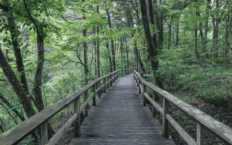 Wooden bridge in woods surrounded by trees