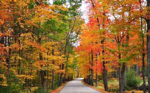Fall Foliage Bordering Mountain Road