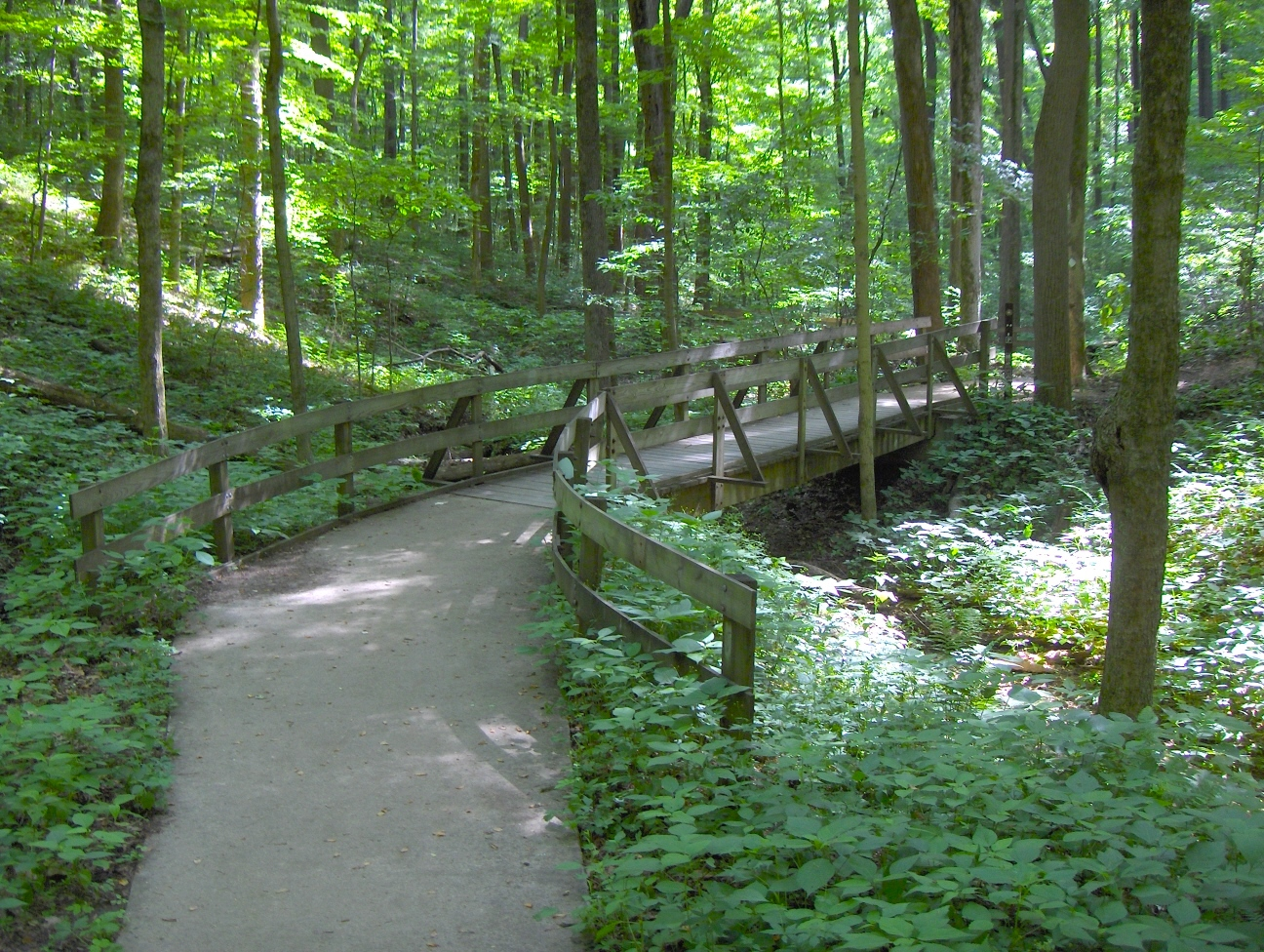 Walking trail and wood bridge through forest