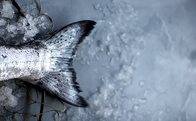 Close up of fish tail on table with ice  Image