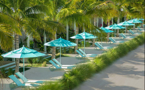 Turquoise umbrellas and beach lounge chairs under palm trees