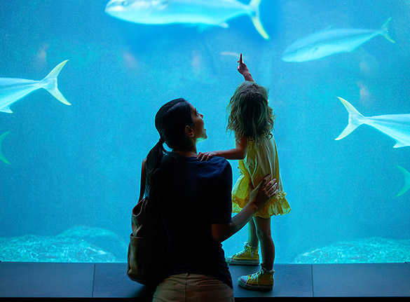 Woman with small girl looking at fish in large aquarium tank