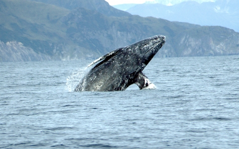 Have a Whale of a Time at Point Reyes