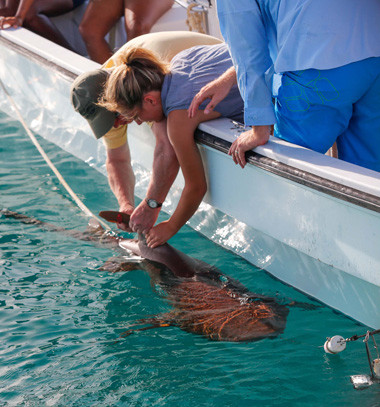 man and women tagging a shark fine over side of boat