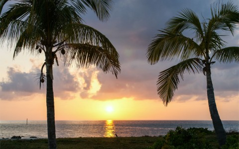 Palm trees with ocean & sunset in the back