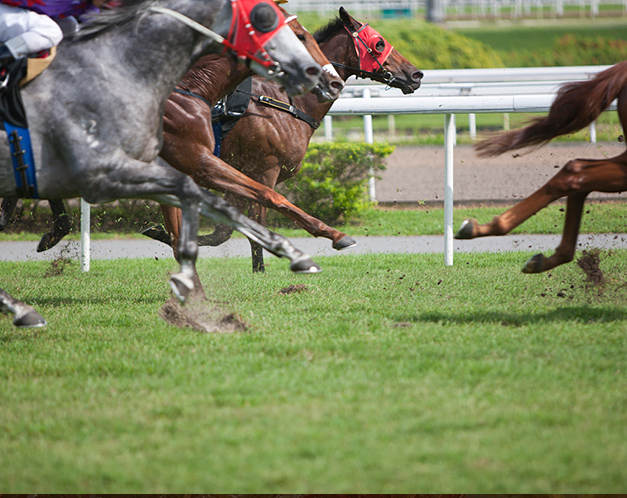horses running on a grass racetrack