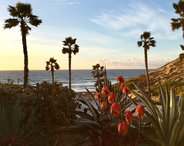 red tropical flowers and palm trees in front of the ocean