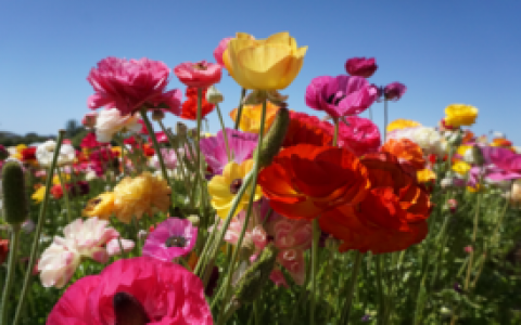 colorful flowers in a field