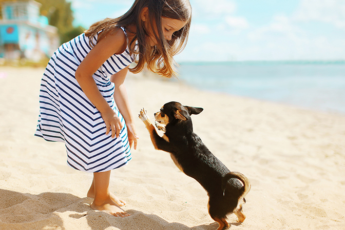 little girl playing with a small dog on the beach