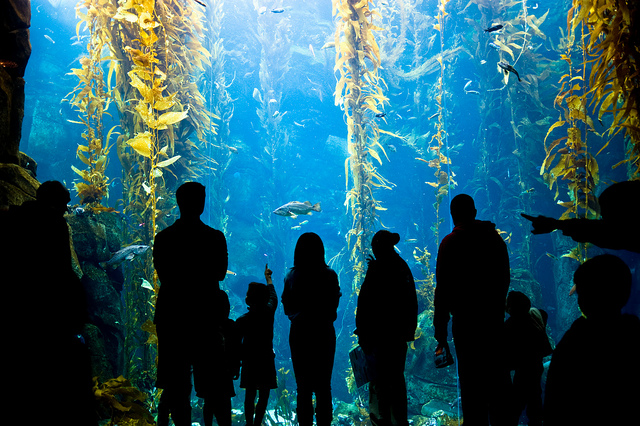 silhouette of people looking a kelp forest