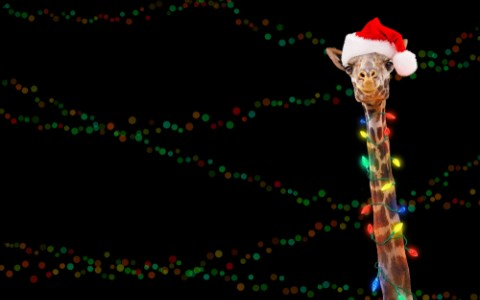 giraffe with santa hat and christmas lights