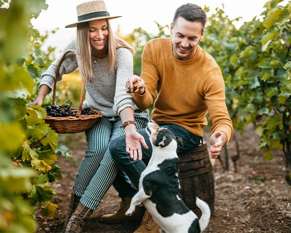 man and woman in picking grapes in vineyard with dog