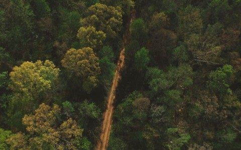 Nature trail within tree canopy from above