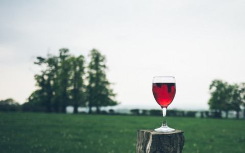 Glass of Wine Outside on a Tree Stump
