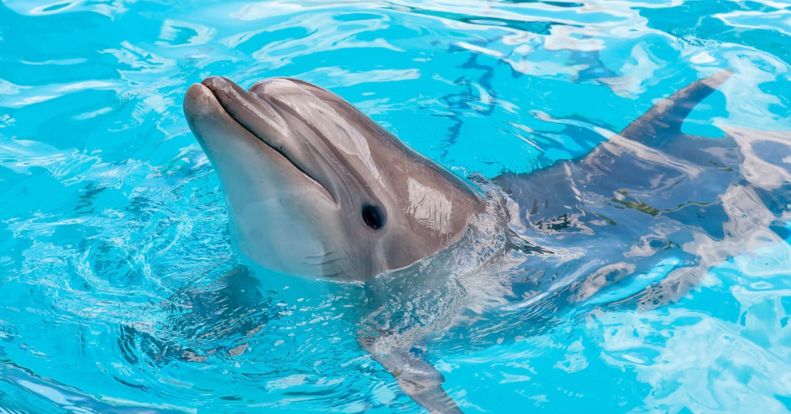 Dolphin with head out of water