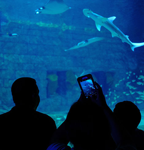 Silhouette of people looking into a shark tank