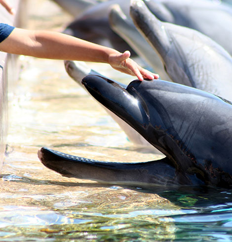 Childs hand petting a dolphin
